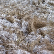 Dry grass with snow — Stock Photo #1372049