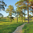 Earth foot path between pine trees - Stock Photo