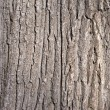 Old tree bark background — Stock Photo