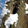 Stok fotoğraf: Tree trunk with hollow