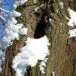 Tree trunk with hollow — Stockfoto