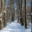 Foot-path in winter park — Stock Photo