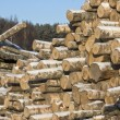 Pile of logs — Foto de stock #1397777