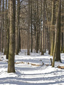 Path in winter park — Stock Photo