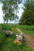 Fußweg im park — Stockfoto