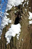 Trädstam med fördjupning — Stockfoto