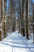 Percorso a piedi nel parco d'inverno — Foto Stock