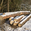 Stock Photo: Pile of logs under snow