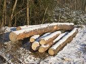Tas de bois sous la neige — Photo