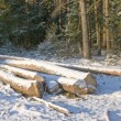 Stock Photo: Pile of logs in winter forest