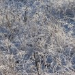 Photo: Closeup of frosty dry grass