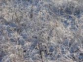 雾都干草地的特写 — 图库照片