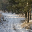 Стоковое фото: Country earth road at forest edge