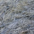 Dry grass background with hoarfrost — Stock Photo