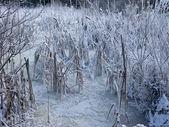 冰冻的池塘 — 图库照片
