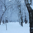 Snowy winter park — Stock Photo #1452951