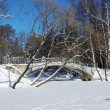 Frozen pond with bridge in winter park — Stock Photo