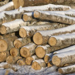 Stack of logs - Stock Photo
