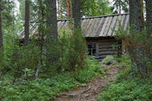 Small wooden hut in forest — Stock Photo