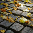 Maple leaves on cobblestones in a ray of — Stock Photo