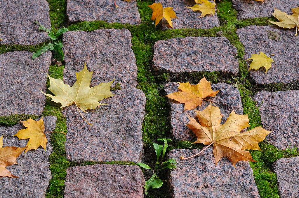 Maple leaves on cobblestones sidewalk on the sun — Stock Photo #1107460