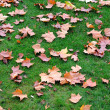 Stock Photo: Maple leaves in green lawn