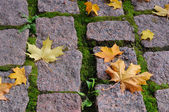 Maple leaves on cobblestones sidewalk on — Stock Photo