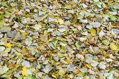 Herbstblätter — Stockfoto
