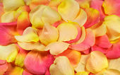 Yellow and pink rose petals — Stock Photo