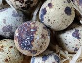 Quail eggs background — Stock Photo