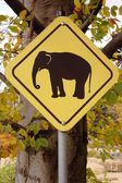 Elephant warning sign — Stock Photo