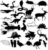 Animals — Stock Photo