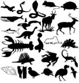Silhouettes of animals — Stock Photo