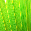 Palm foliage — Stock Photo