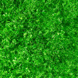 Natural grass background — Stock Photo #1124700