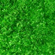 Stock Photo: Natural grass background