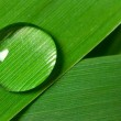 Water drop on a leaf — Stock Photo