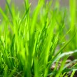 Grass — Stock Photo #1124947