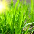 Green grass in sunny weather — Stock Photo