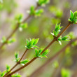 Spring leaves — Stock Photo