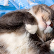 Cat sleeps in bed — Stock Photo #1125209