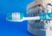 Dentadura postiza sostiene un cepillo de dientes — Foto de Stock