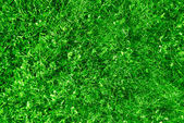 Natural grass background — Stock Photo