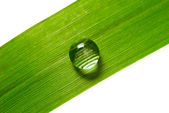 Water drop on grass — Stock Photo