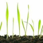 Isolated plants — Stock Photo