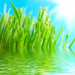 Royalty-Free Stock Photo: Grass and water