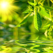 Fresh green leaves highlighted by sun. — Stock Photo