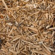 Wooden mulch — Stock Photo