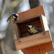 Quarrel of titmouse — Stockfoto #1114001