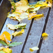 Stock Photo: Fallen foliage on bench